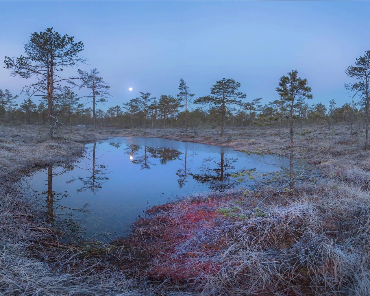 лунное утро, на болоте, апрель, фото, павел ващенков