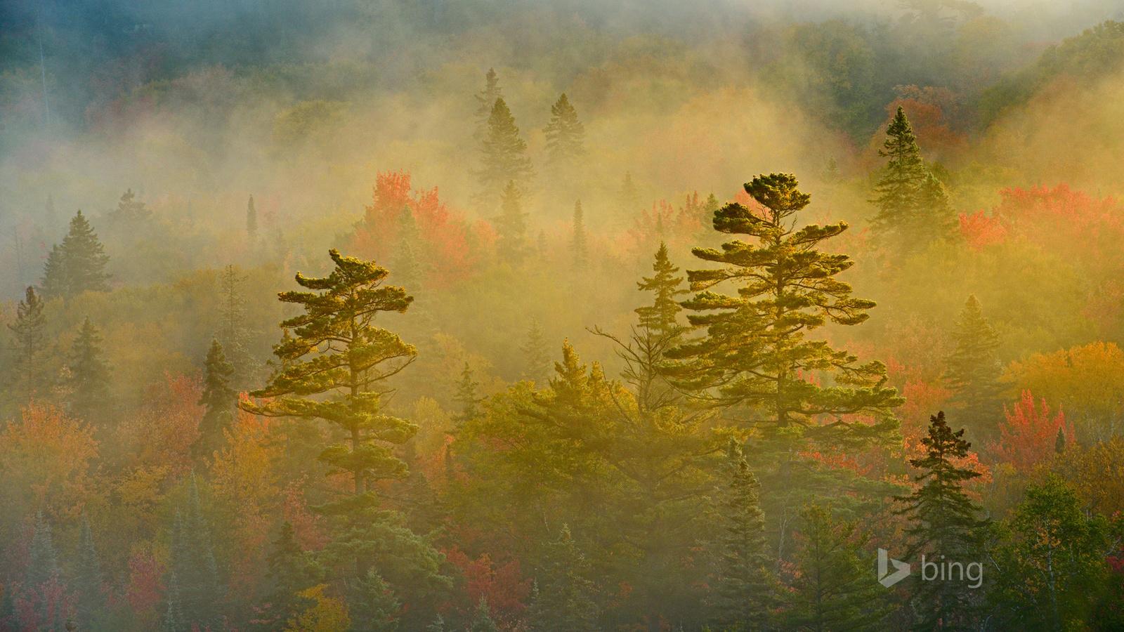 лес, туман, bing