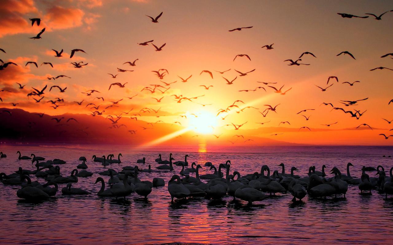 вечер, птицы, заря