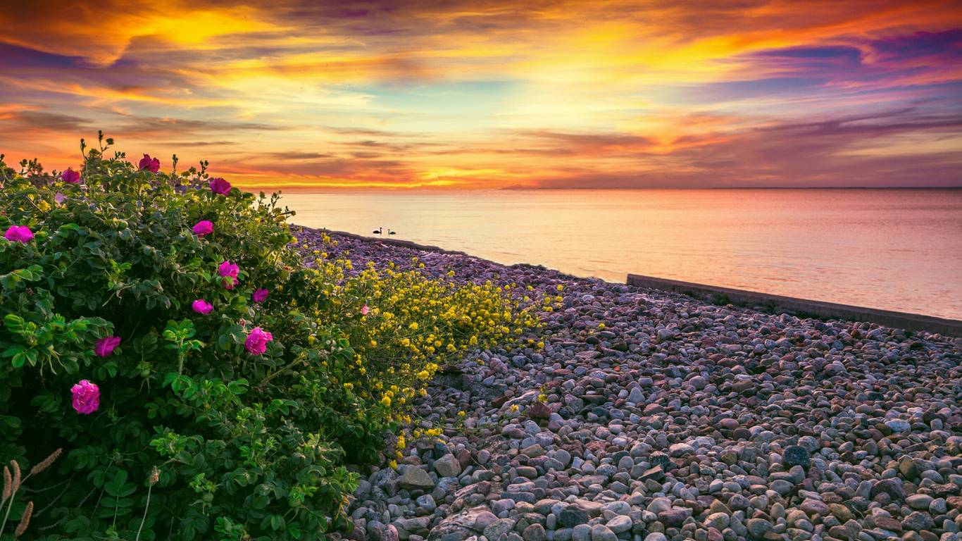 берег, галька, кусты, цветы, небо, закат, заря, море