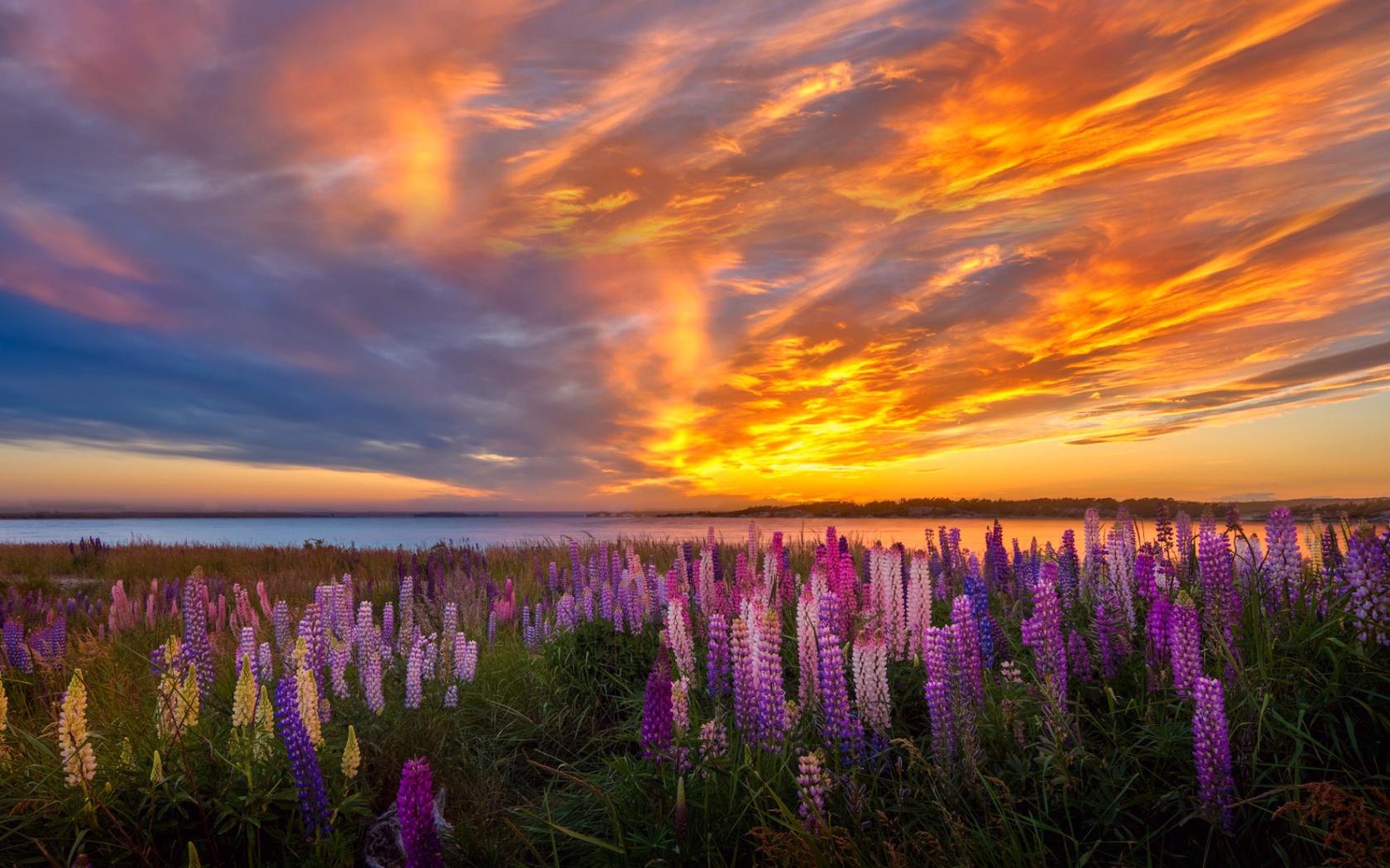 луг, цветы, небо, заря, море