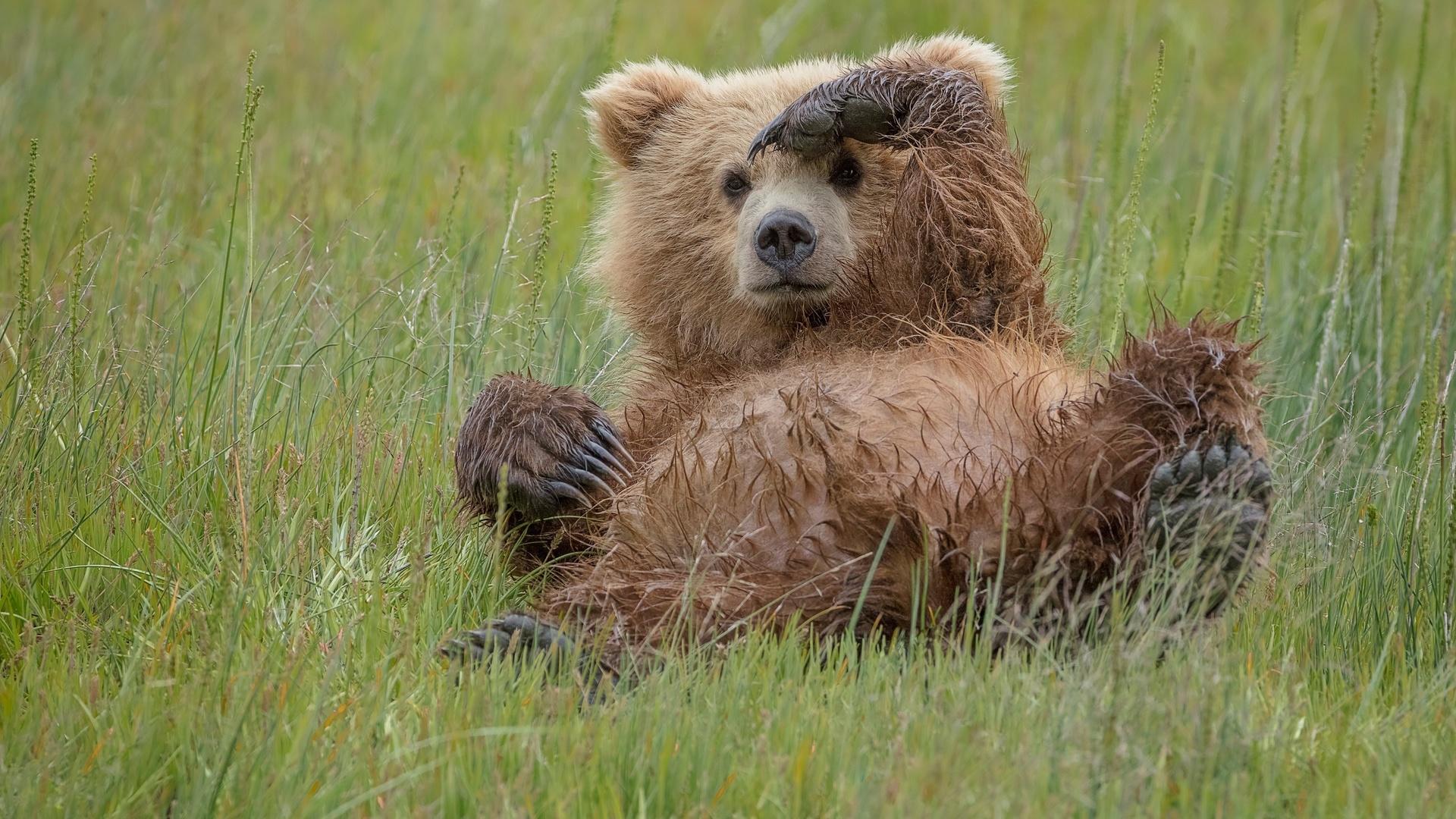 трава, медведь, жест
