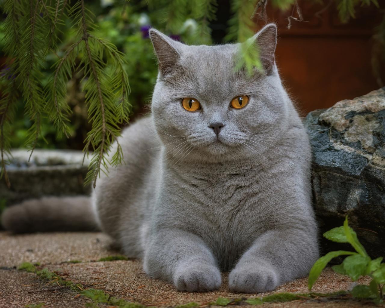 красивый, серый, кот, возле, веточек, ели