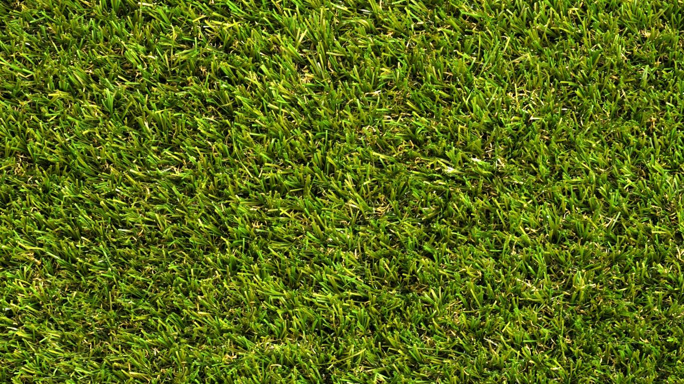 газон, трава, зелень