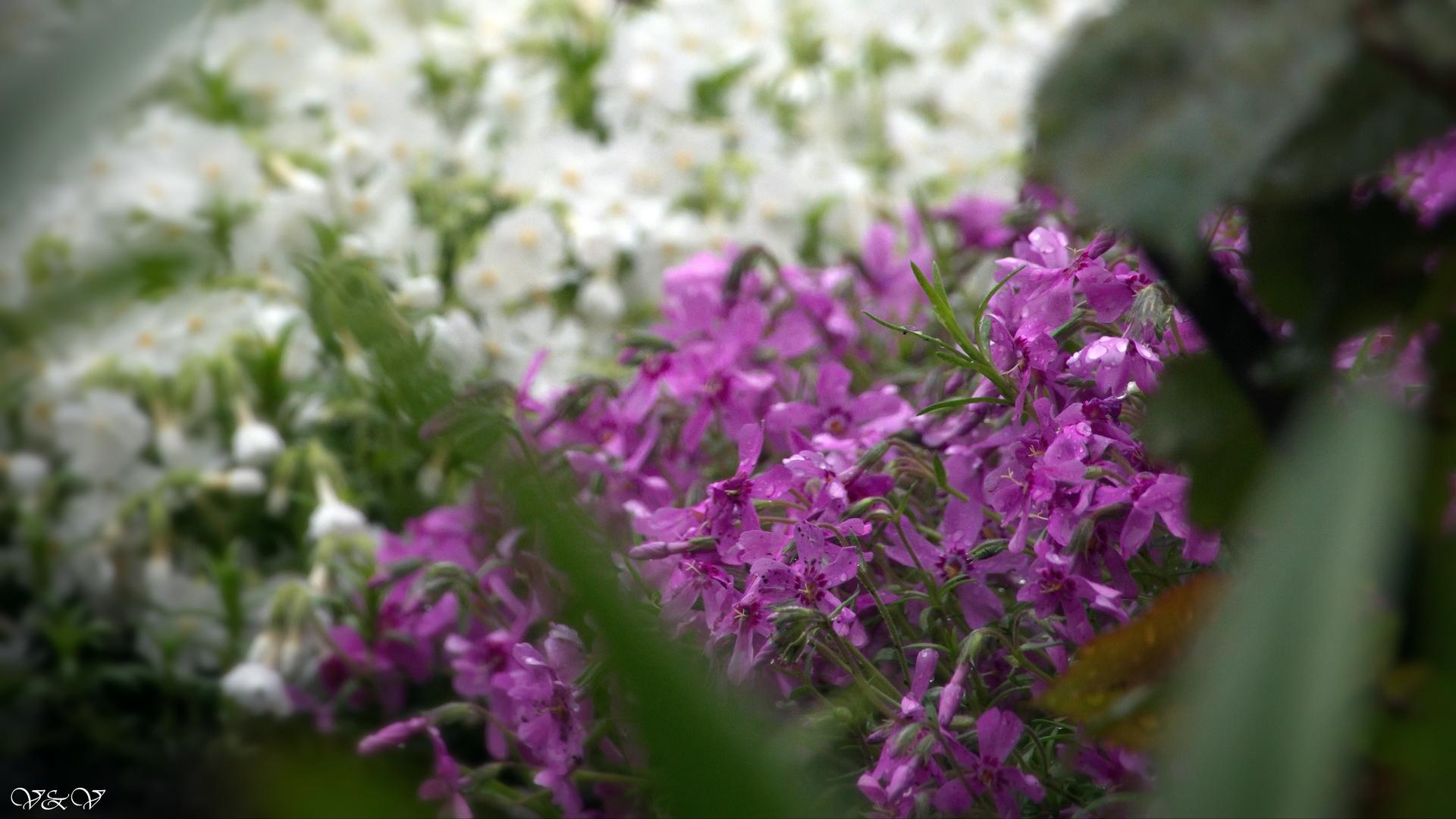 цветы, красиво, для души