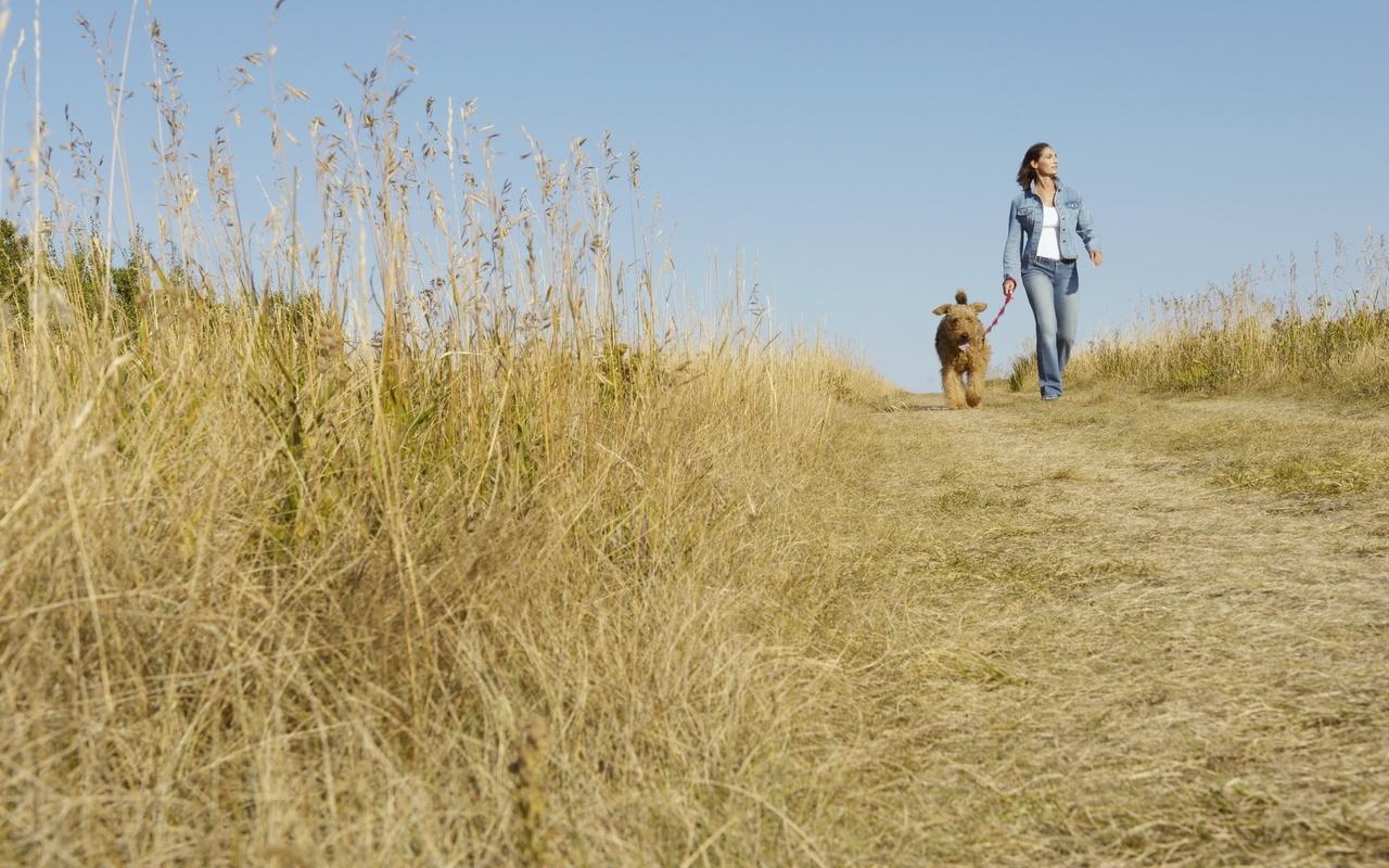 Картинки прогулка с собакой 5