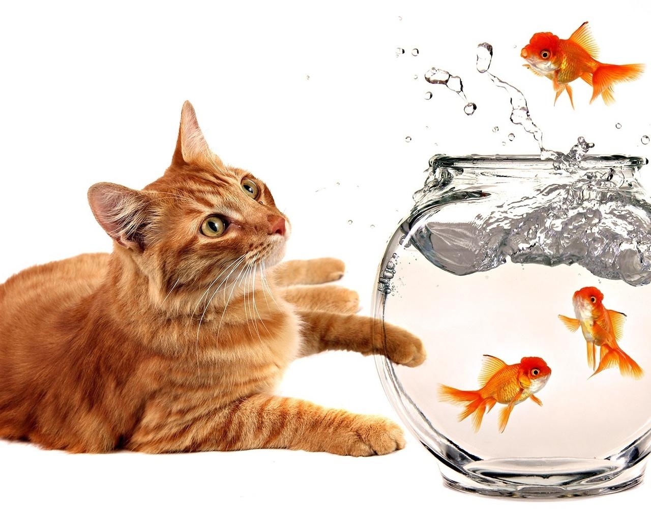 котенок ловит рыбу видео
