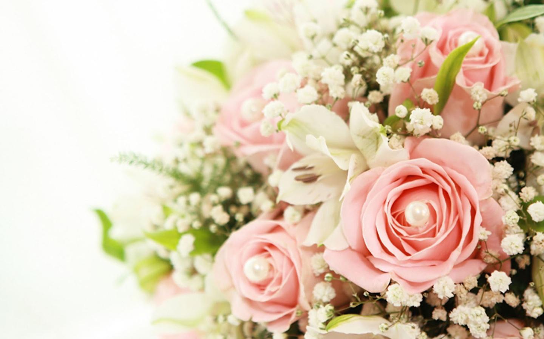 Розы цветы разрешение картинки 1440x900