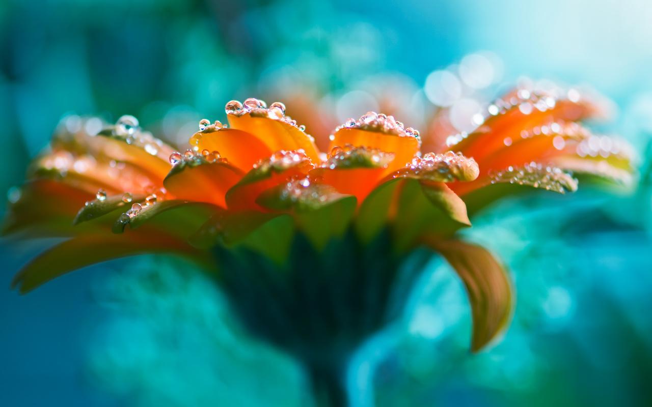 beautiful flowers with water drops BestHDWallpapersPack929 133 bender777post