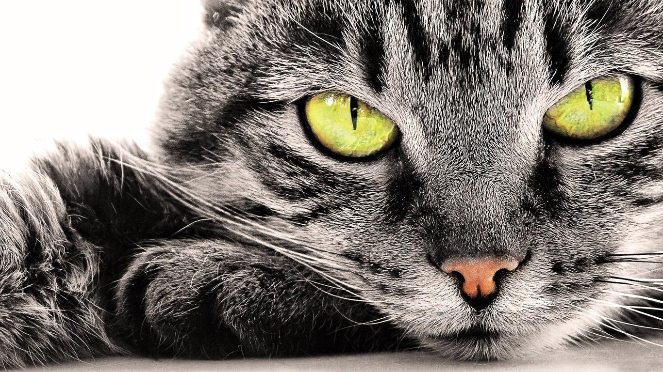 картинки кошачьих на рабочий стол