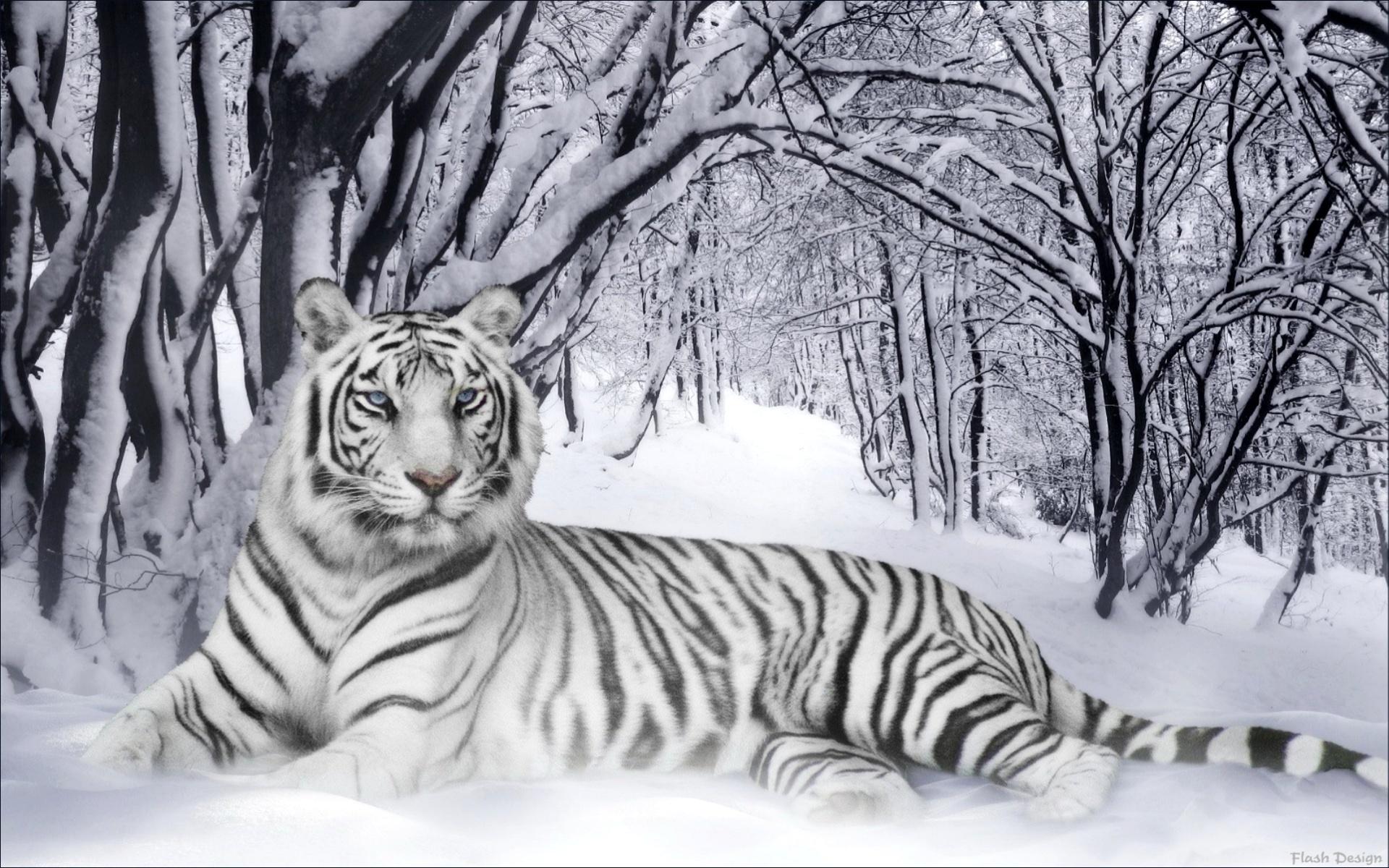 """Оригинал - Схема вышивки  """"Белый тигр """" - Схемы автора  """"irenidanna """" - Вышивка крестом."""