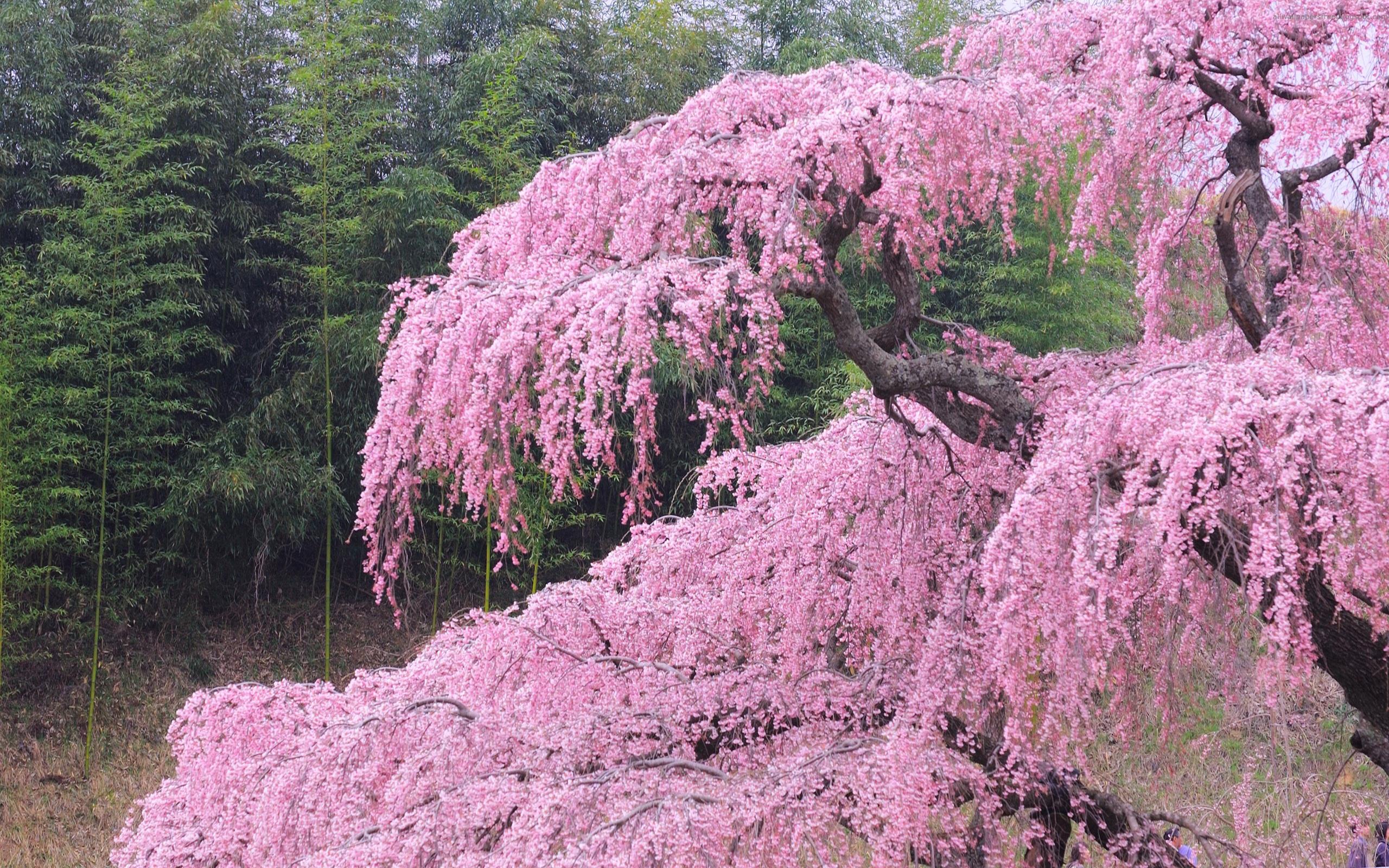 Обои весна цветы красота на рабочий
