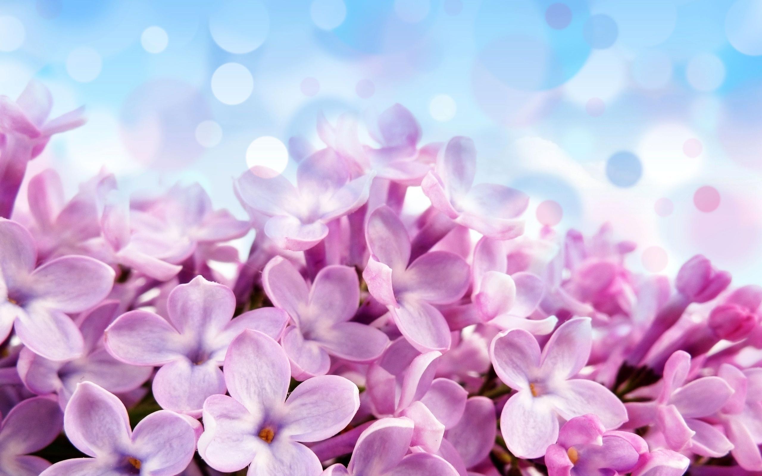 Обои весна цветы красота