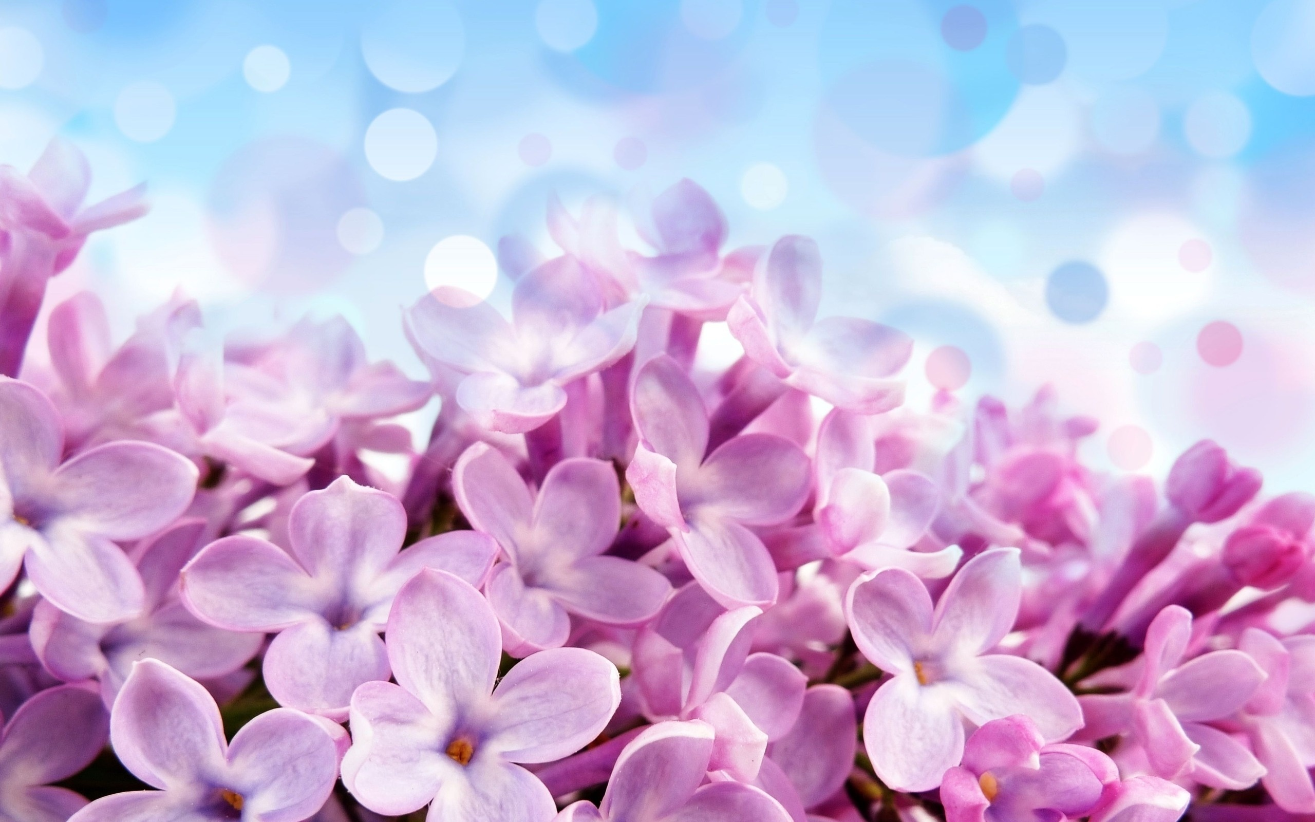 download wallpaper 1024x600 lilac - photo #9