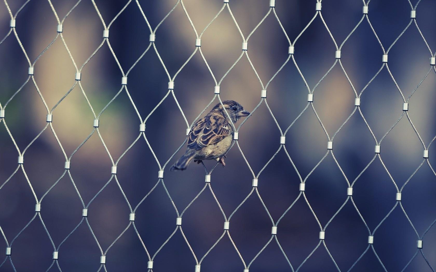 Крылья животные птица клюв воробей