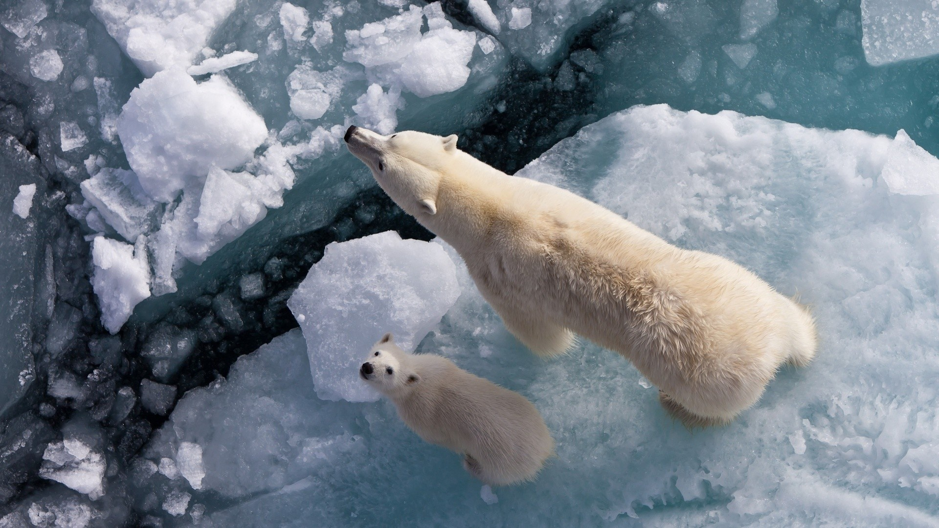 Обои звери зимой — полная информация