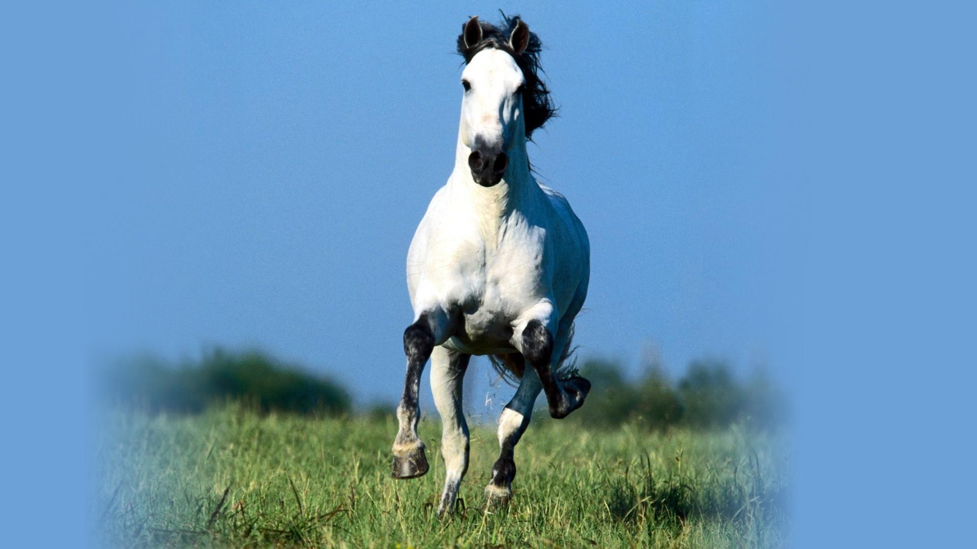 Обои анимация небо белый конь на рабочий стол картинки с