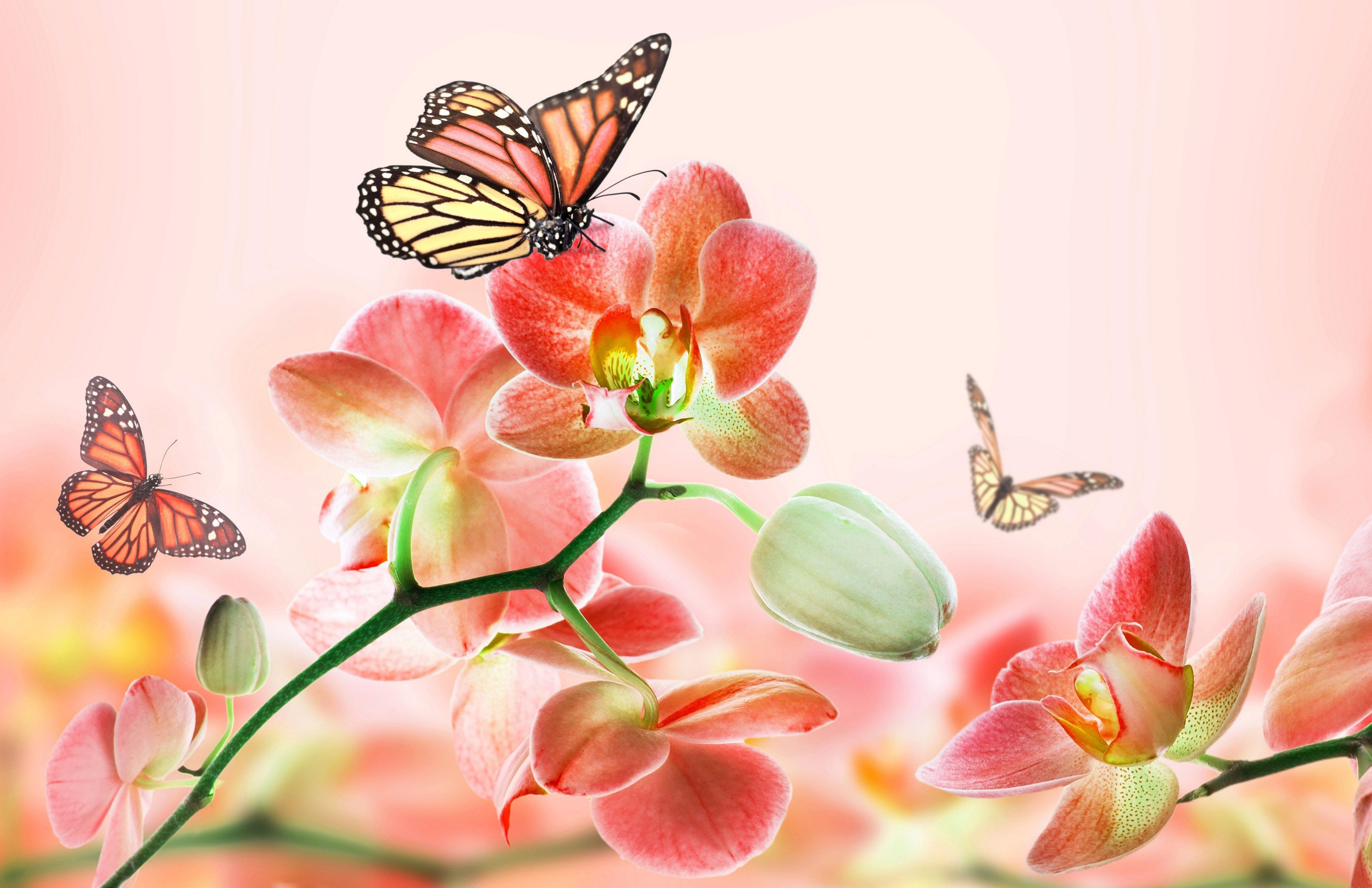 Обои фотошоп бабочки розовый фон