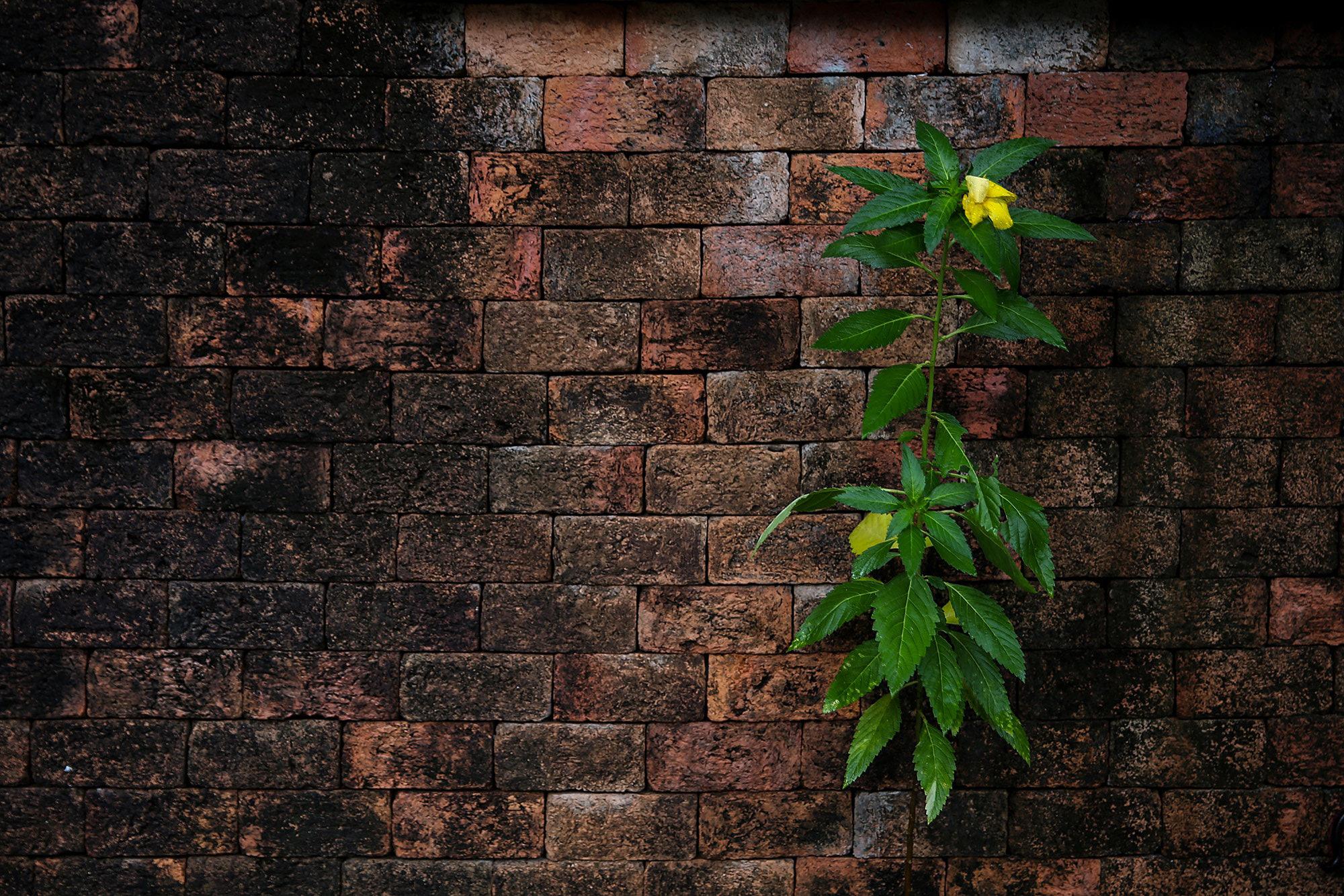 Картинка стена кирпичная
