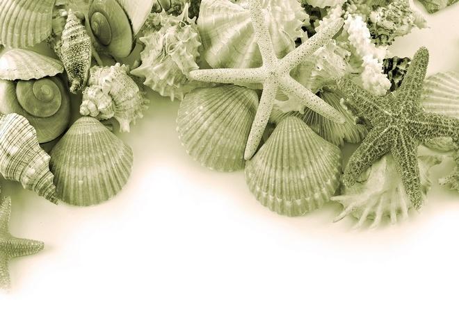 Обои морские сокровища, ракушки, звезды. морские сокровища, ракушки, звезды.