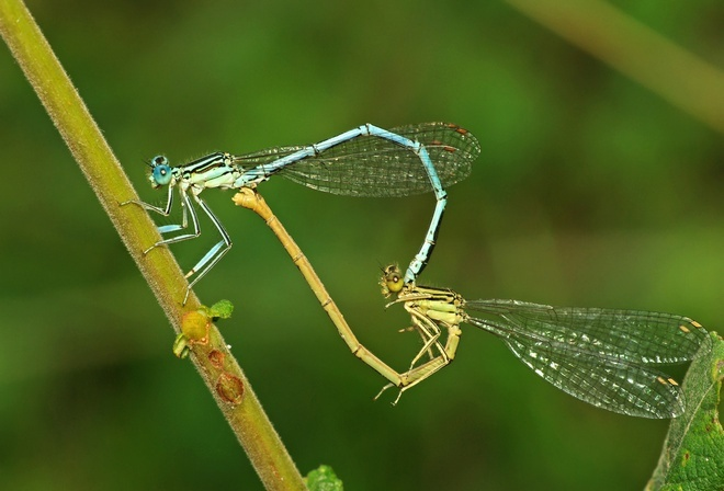 Удивительные творения природы