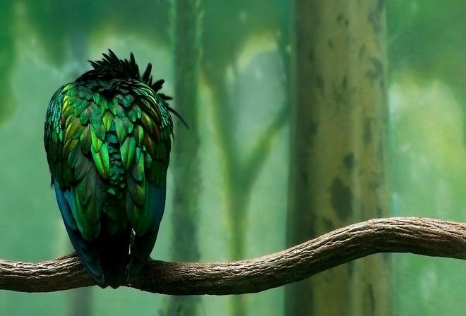 Птица 759 ветка 584 зеленое оперение