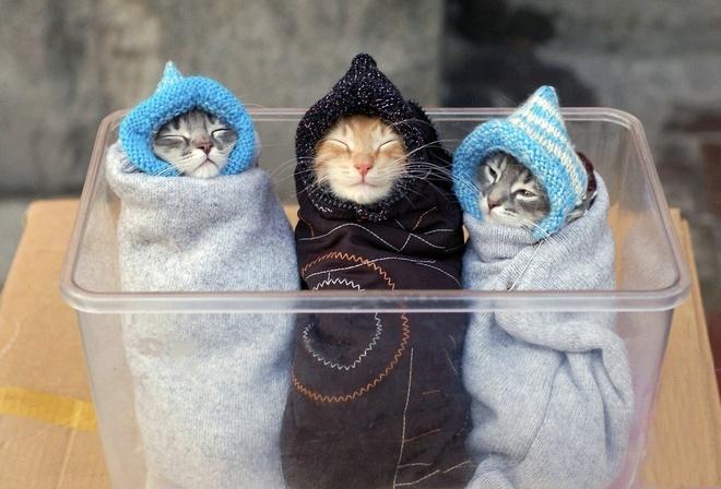 Обои маленькие крохи котята