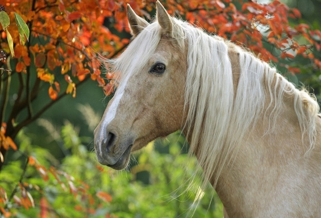 Теги белая лошадка 5 красивые глаза