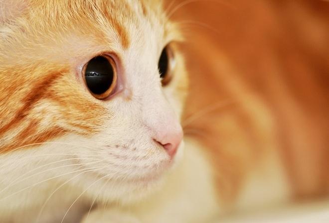 видео с белой кошкой с большими глазами