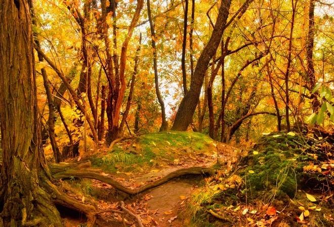 Дикая природа деревья сбрасывают