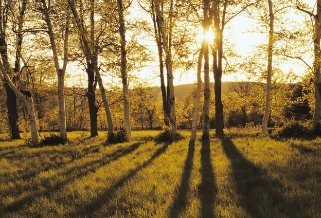 Солнышко картинки об осени