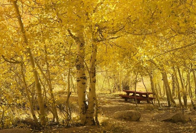 Картинки березовая роща осенью на рабочий стол