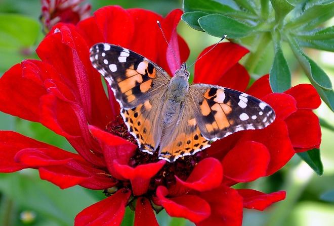 Цветы красивые обычные не обычные