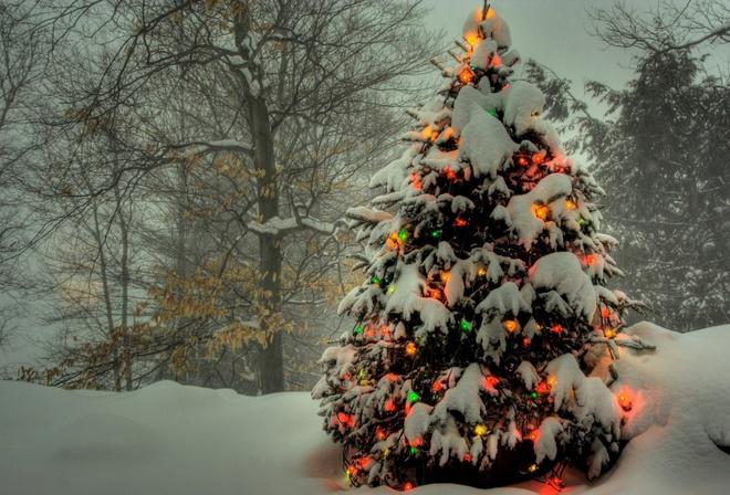 Гирлянды снег зимний лес огни ёлка