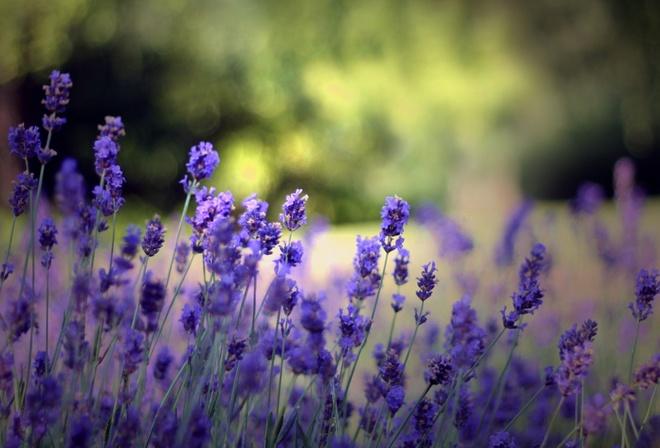 Поляна растения лето природа цветы