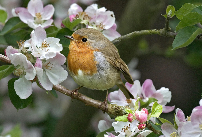 Весна цветы красота цвета радуги