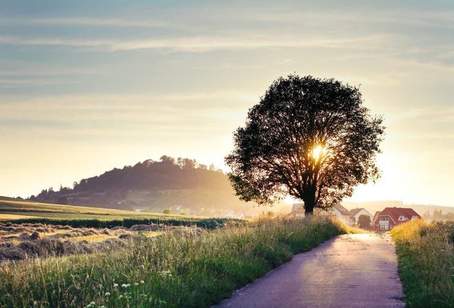 Дорога дерево пейзаж природа лето