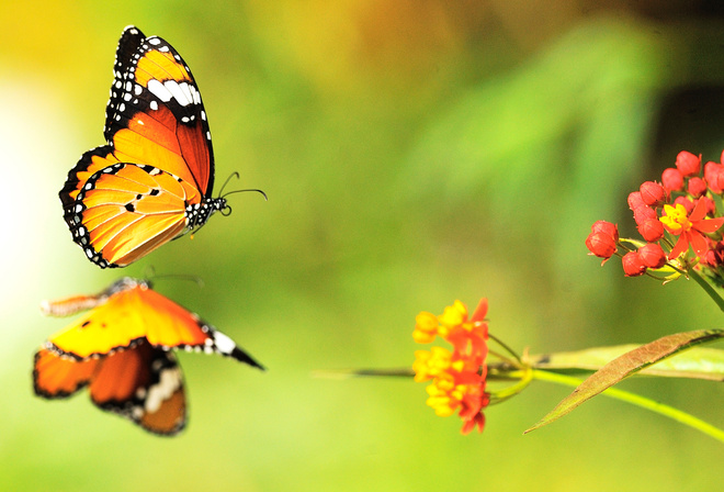 Обои цвета, цветы, яркие, Бабочки на ...: www.nastol.com.ua/look/21651-cveta-cvety-yarkie-babochki.html