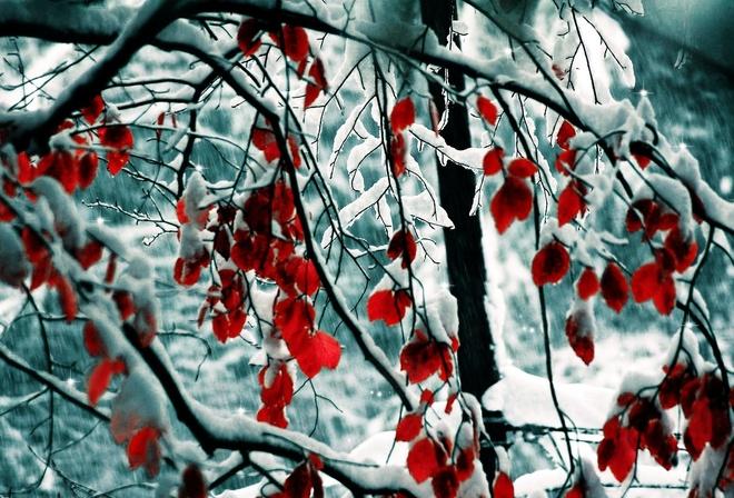 Картинки зима