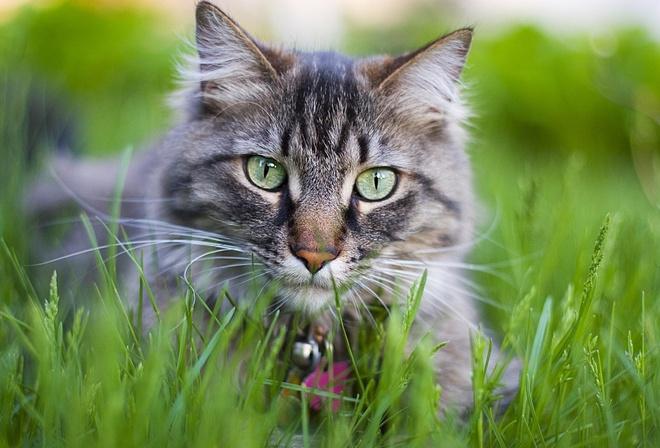 Обои животное кот кошка красиво фон