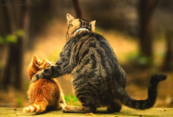 кошка, кот, котенок, семья, дружба
