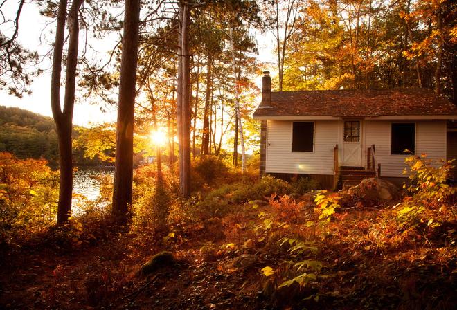 Деревья осень пейзаж лес природа