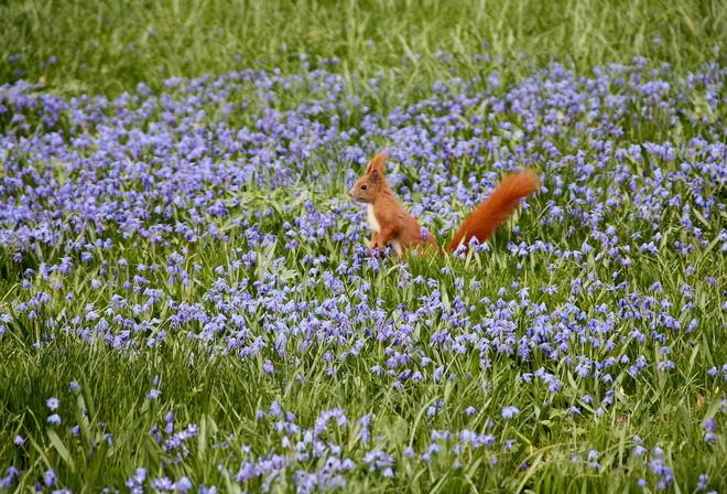 Обои цветы белка природа поле на
