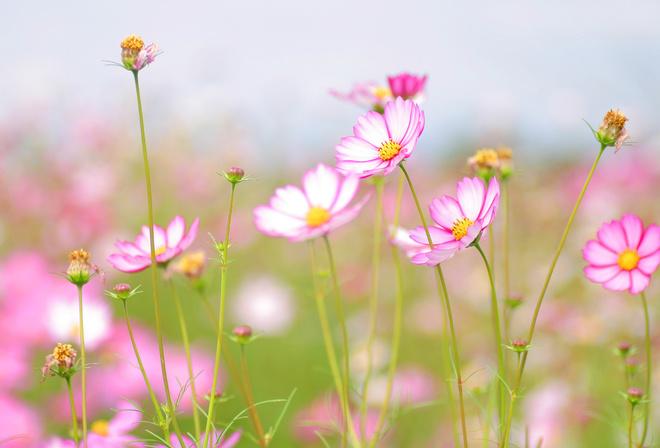 Красивые летние цветы обои на рабочий стол