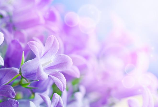 8 март, листки, лепестки, красивые, hd, Цветы