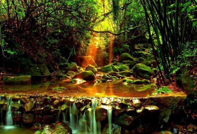 Обои природа лес лучи ручей на