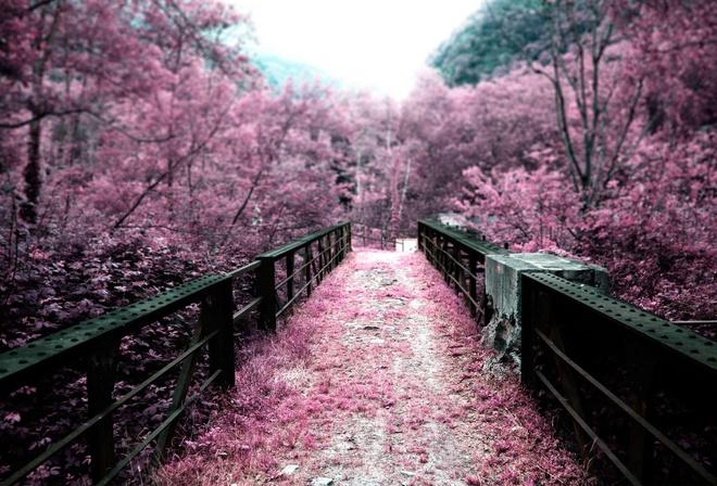 Цветы сакура мостик япония лепестки