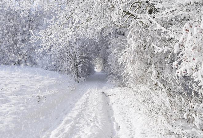Заснежено дорога деревья снег зима