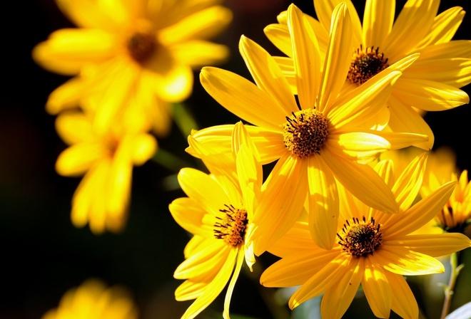 Фото в желтых цветах