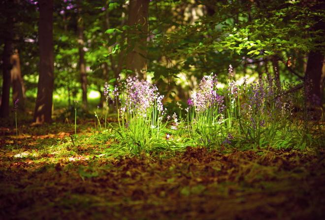 картинки на рабочий стол лето природа лес № 489039 бесплатно